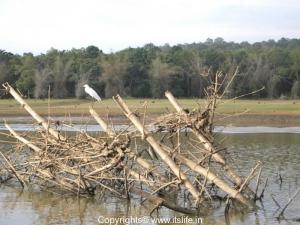 Bamboo in Kabini - Egret