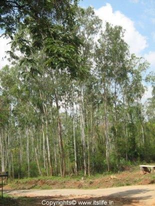 Bannerghatta National Park