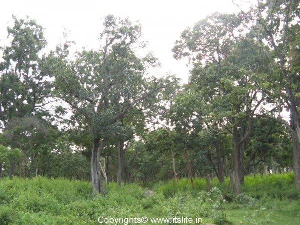 Madumalai Forest