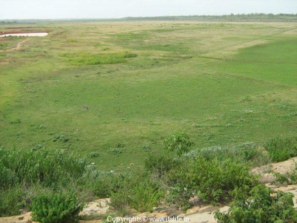 Hessarghatta Lake