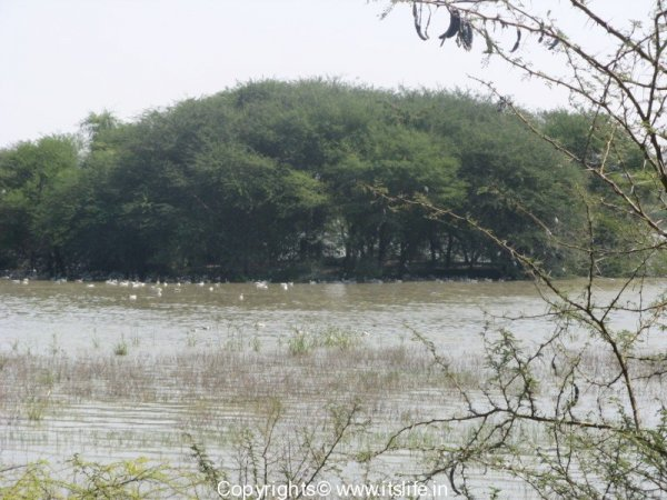 Magadi Lake