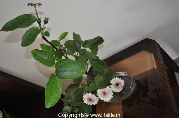 Flower Arrangement - Three Musketeers