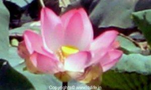 garden-lotus-center-800-x-480