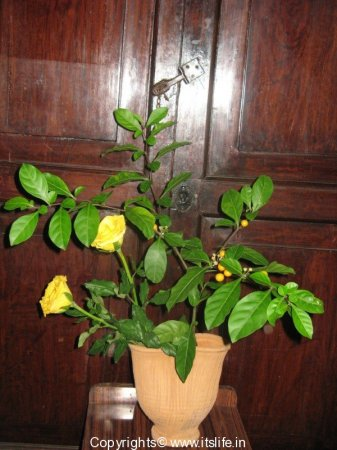 Flower Arrangement - Yellow Berry