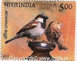 House Sparrow Day - 2013