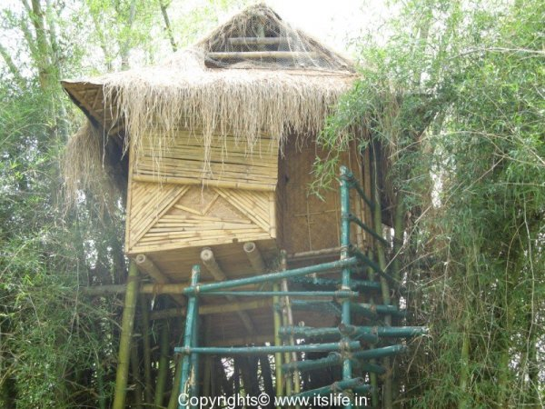 Bamboo Tree House