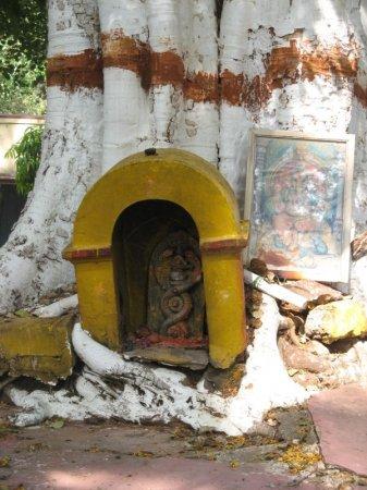 Ashwatha