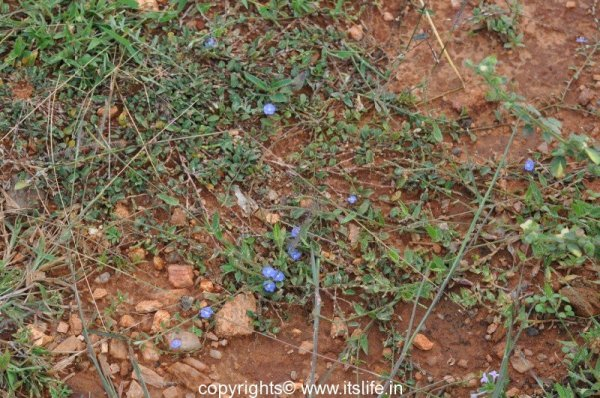 gardening-vishnukranthi