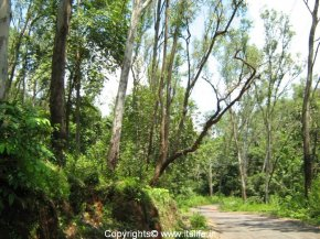 Catigao Wildlife Sanctuary