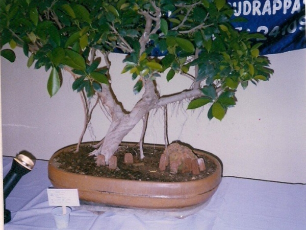 diy-bonsai-5_0
