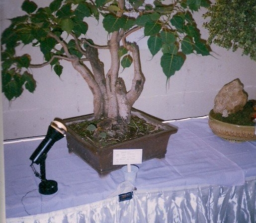 diy-bonsai-7_0