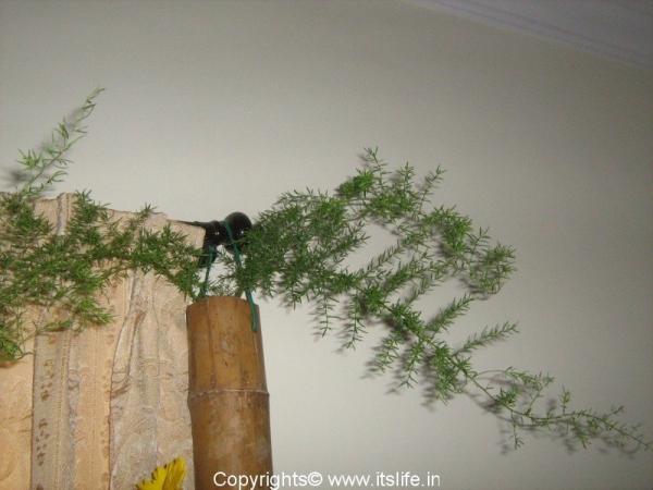 diy-nijuike-bamboo2.jpg