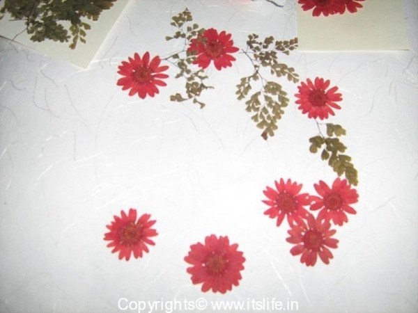 Wall hangings using Pressed Flowers