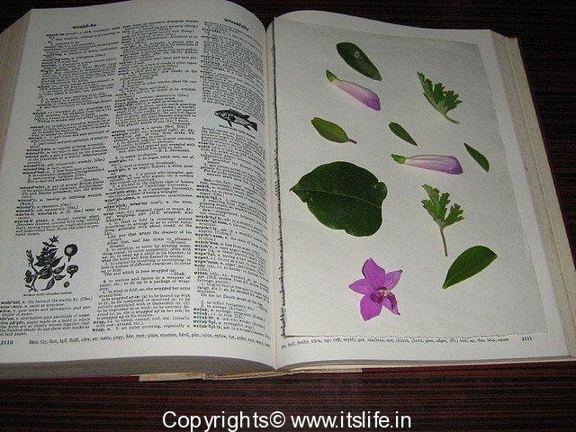 How to press flowers art pressed flowers greeting cards hobbies art of pressing flowers solutioingenieria Choice Image