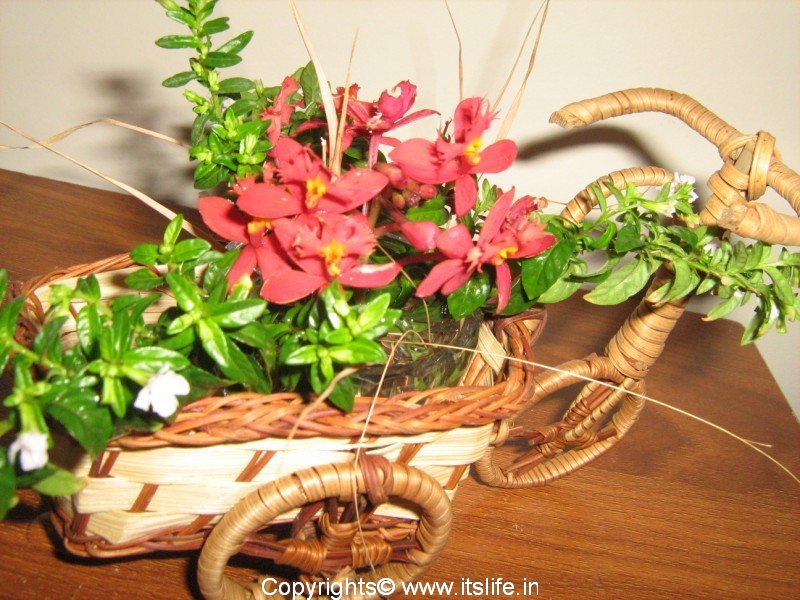 flower arrangement  cycle cart  hobby  cart arrangement  diy, Beautiful flower