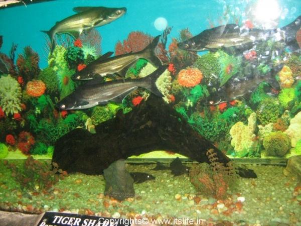 diy-aquarium
