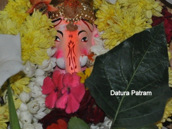 Datura Patram