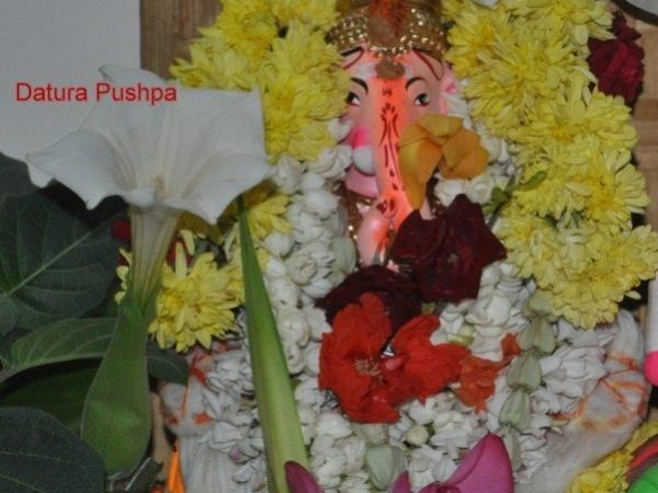 Datura Pushpam