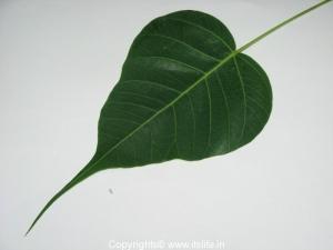 Arali Pathram
