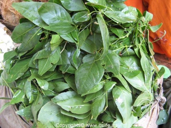 bilva-leaves