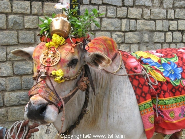 Decorated Bull