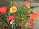 festival-dasara-flower-show1.jpg