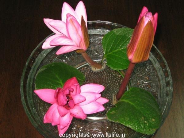Divinity Flower Arrangement