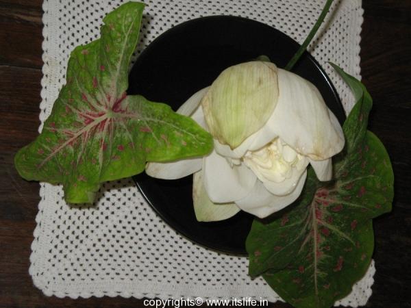 Flower Arrangement - White Beauty