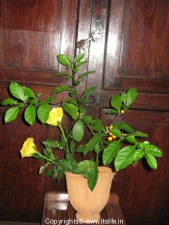 Flower Arrangement - Yellow Berry
