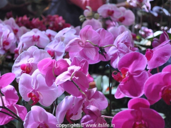 Orchid Tips