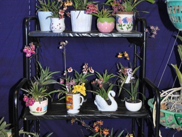 Orchid Growing Tips