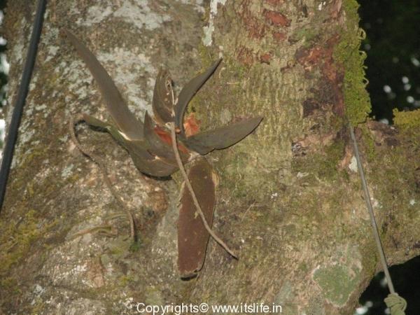 gardnening-orchids-oberioron-1