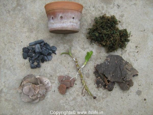 Orchid Potting materials