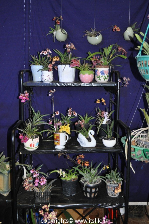 Tips For Growing Orchids
