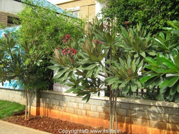 garden-plumaria2.jpg