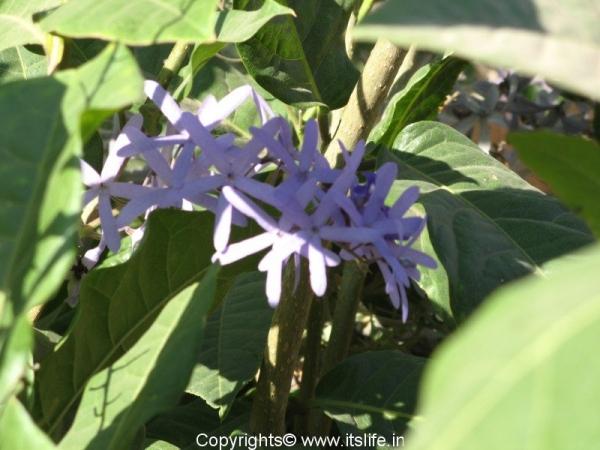 garden-purple-wreath2.jpg