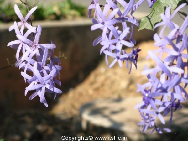 garden-purple-wreath3.jpg