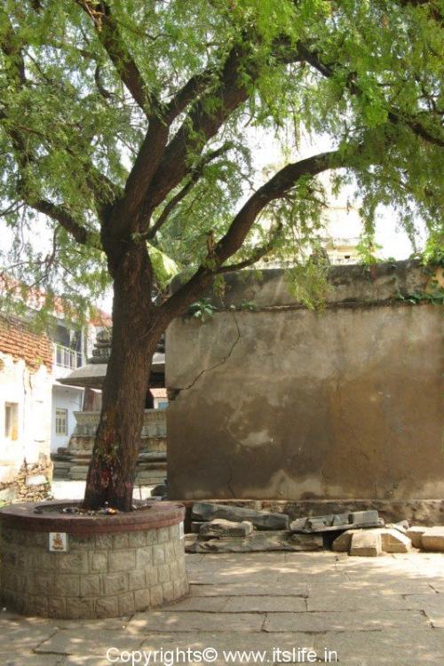 Banni Tree