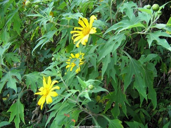 gardening-b5-wild-flower1-nutrients