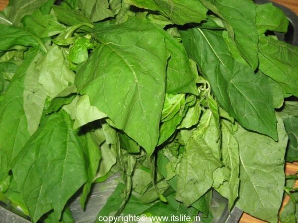 Ganika Patram - Garden Night Shade