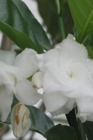 Pinwheel flower