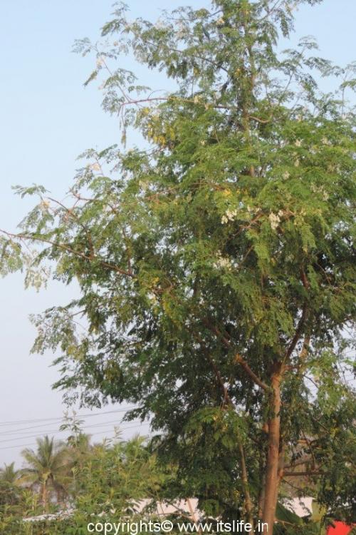 Nuggekayi