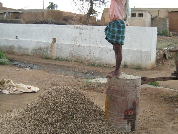 Groundnuts Winnowing