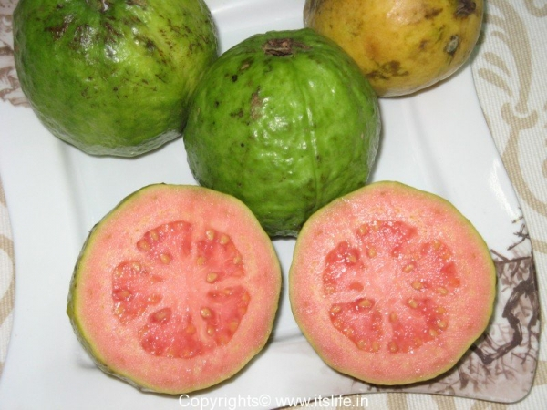 Guava - Red variety