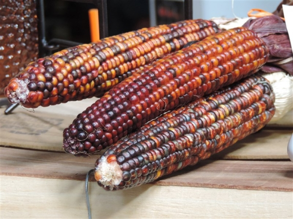 Multi-colored Corn