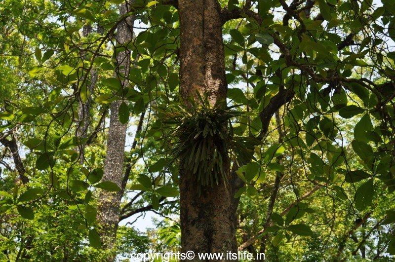 Teak Tree Itslife In