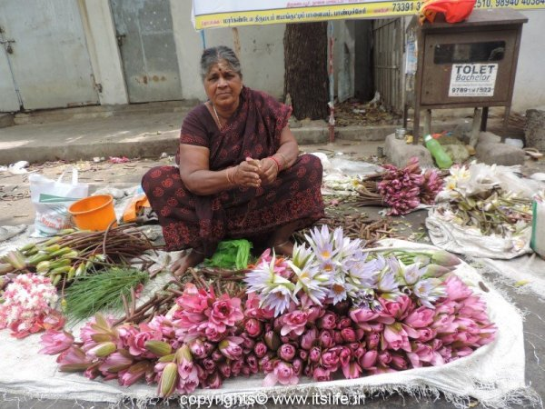Happy selling Lilies