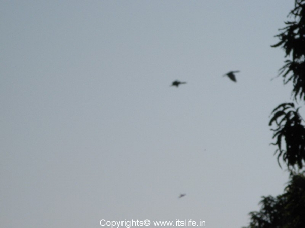 travel-khkere-large-cormorant.jpg