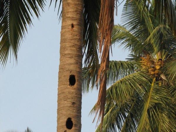woodpecker-nests