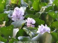 travel-khkere-hyacinth-2.jpg